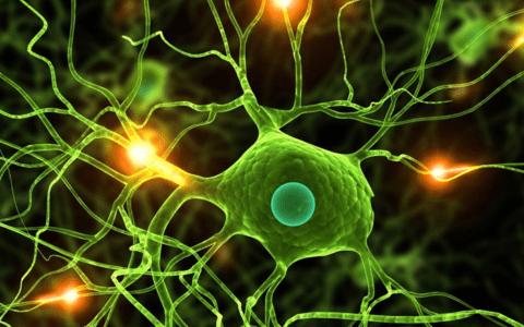 biyoloji-dersi-egitimi